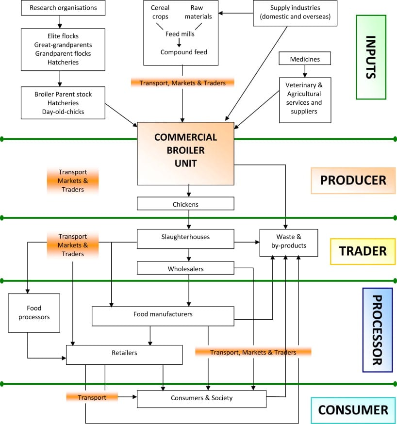 Poultry Value Chain Simple