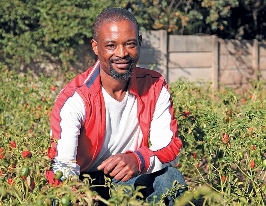 Clement Tshuma Vegetable Farmer In Gauteng South Africa