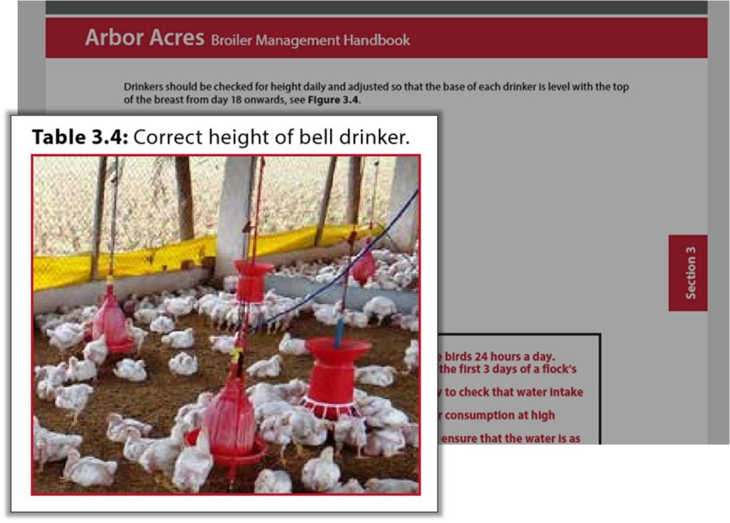 adjust the height of bell drinker for growing broiler birds