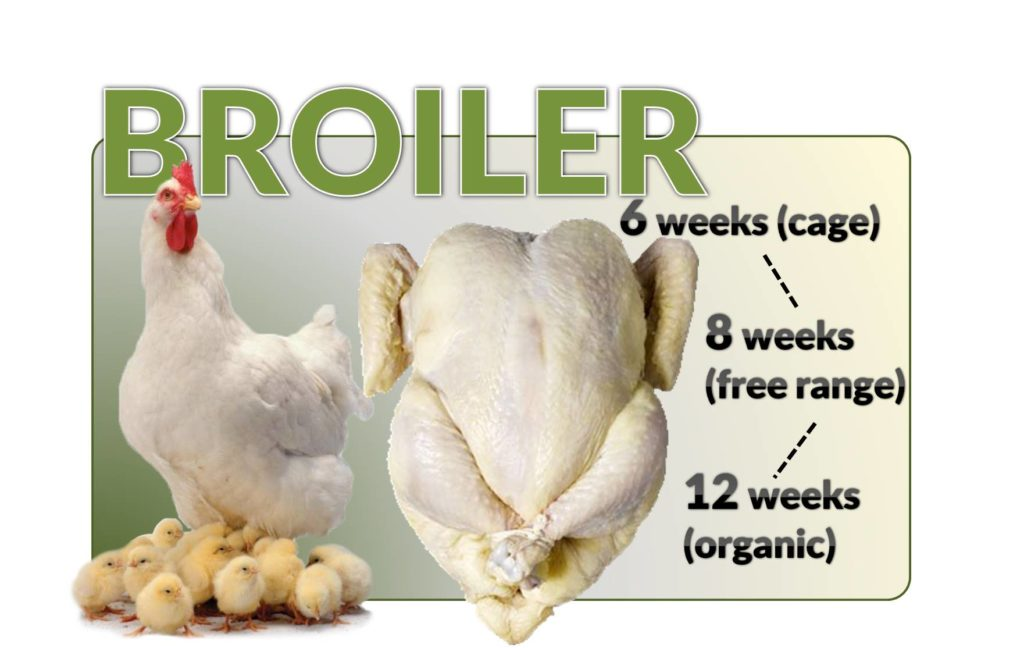 broiler definition