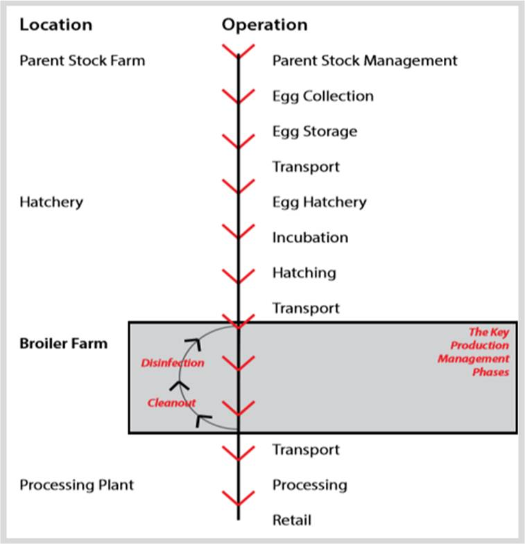 Broiler Farming Value Chain