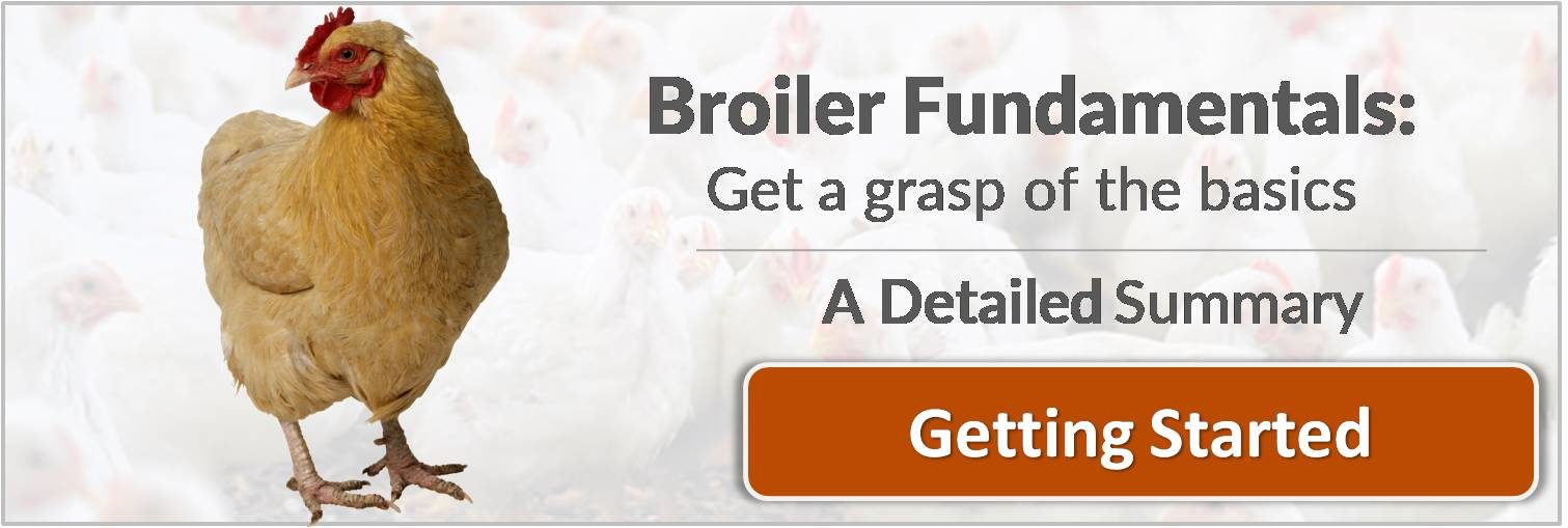 broiler fundamentals