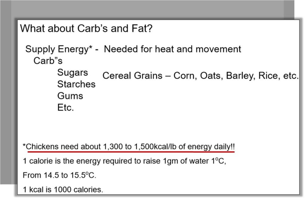 carbohydrates and fats for energy in broiler growth