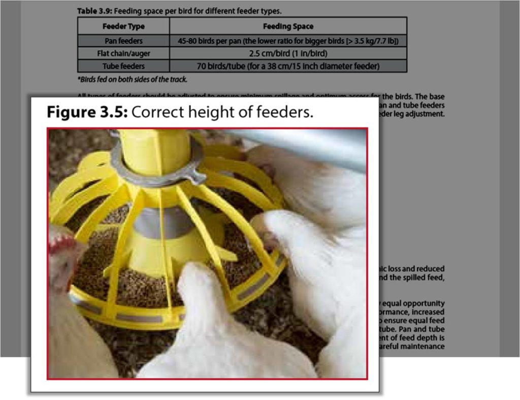 correct height of broiler feeders on farm