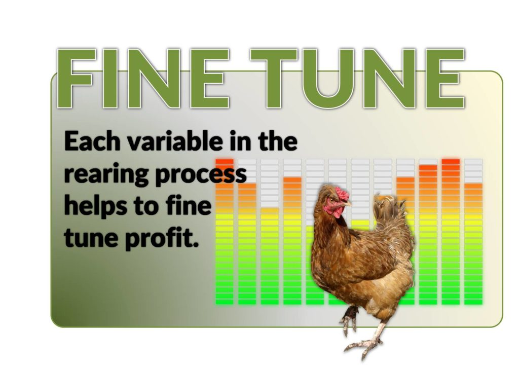 fine tuning poultry profits