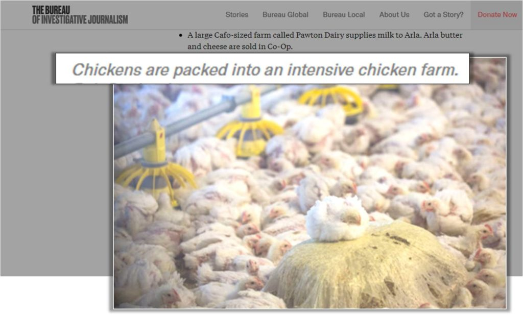 intensive broiler farming
