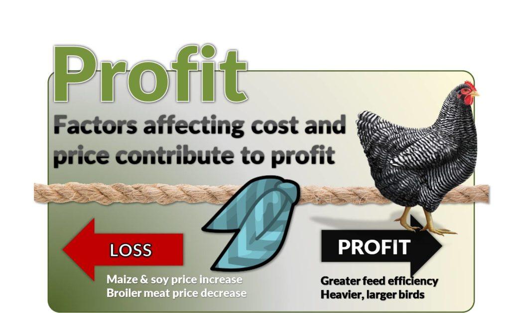 broiler profit