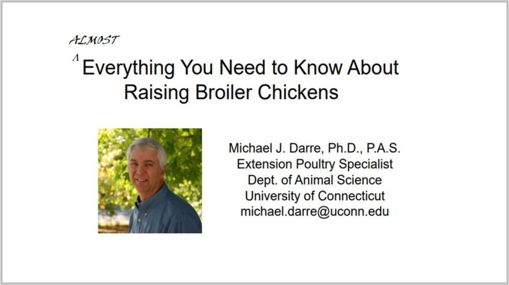 Almost Everything You Need To Know About Raising Broiler Chickens