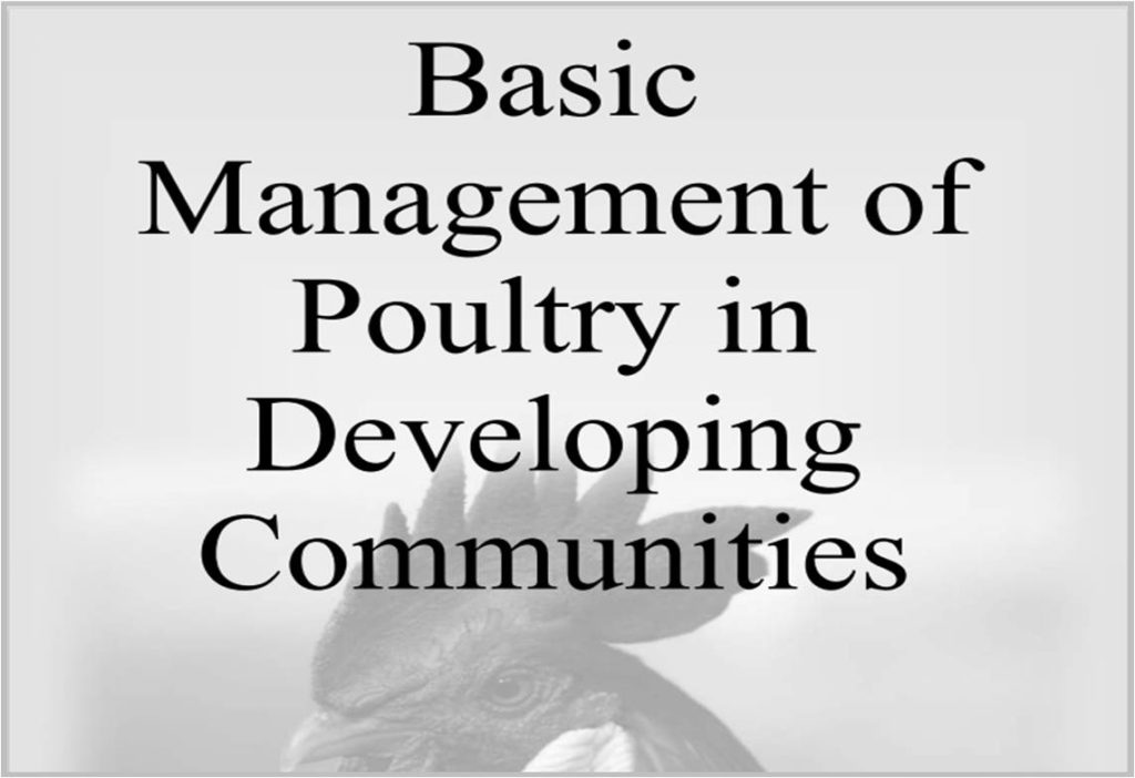 Basic Management of Poultry