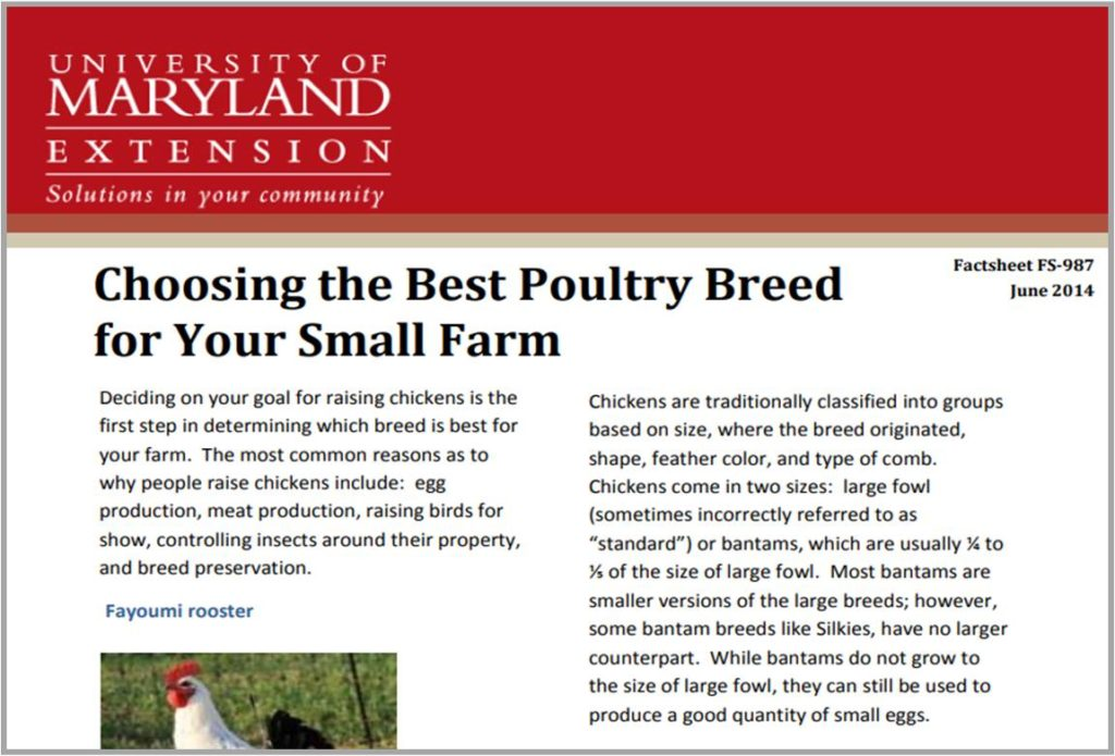 Choosing The Best Poultry Breed For Your Farm