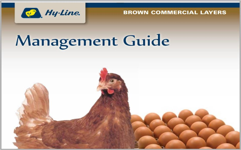 Brown Commercial Layers Management Guide