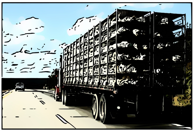Poultry truck cartoonized