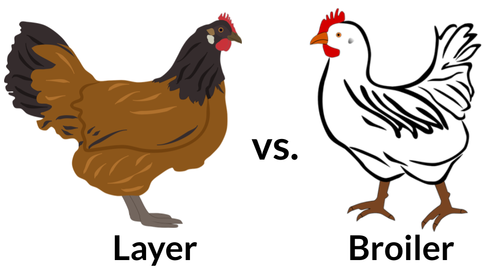 Choose Your Type of Poultry Business