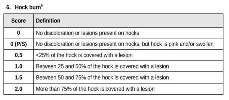 Hock burn lesion chart for broilers