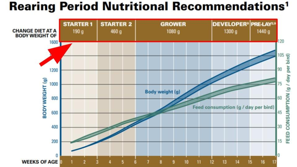 Nutritional Requirement of Hyline Layer Hens