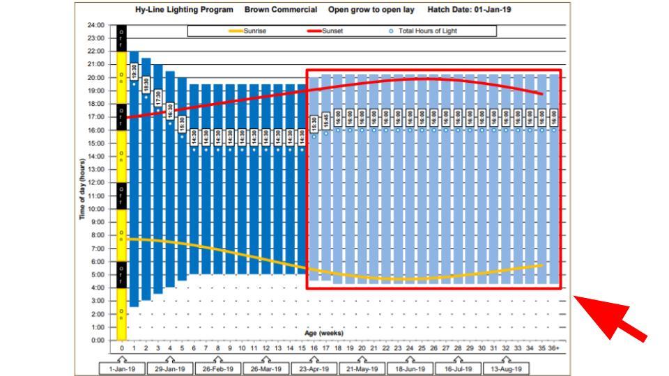 Optimal Layer Hen Lighting Program Chart (Hyline)