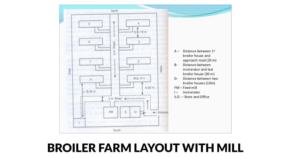 Broiler farm layout with feed mill and distances between buildings