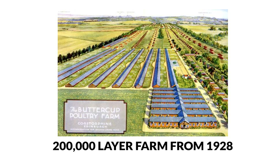 200,00 Layer farm illustration Buttercup Poultry Farm (1928)