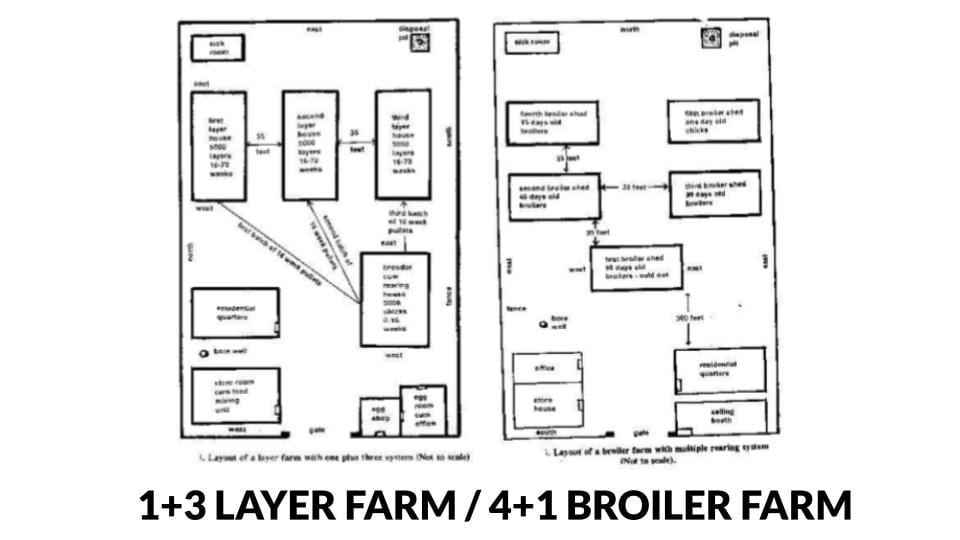 1+3 Layer farm and 4+1 broiler farm rearing system layout plans