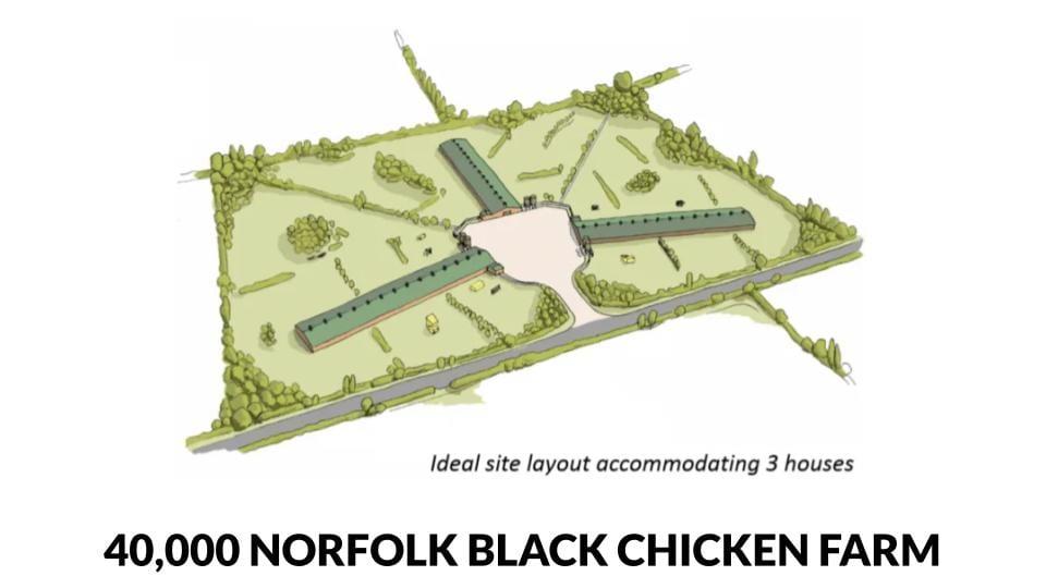 40,000 bird Norfolk Black Chicken Farm Plan - 3 shed / free range