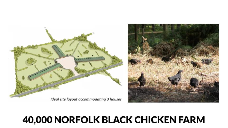 Norfolk Black Chicken 40,000 bird farm plans