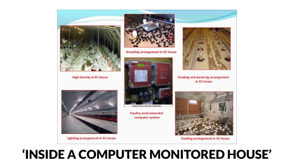 Inside a computer controlled poultry house
