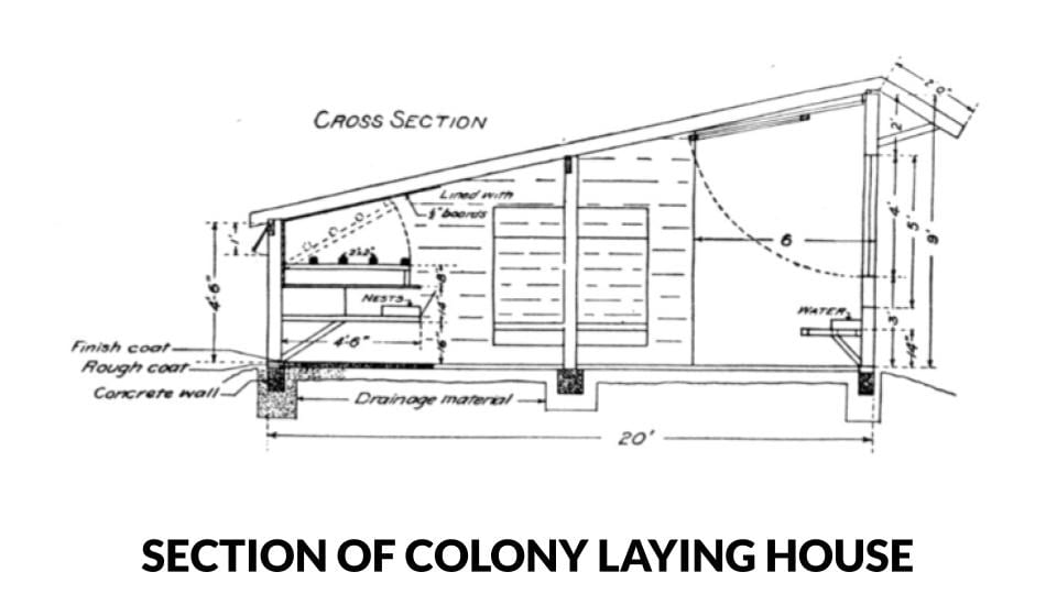 Section of a colony style laying house