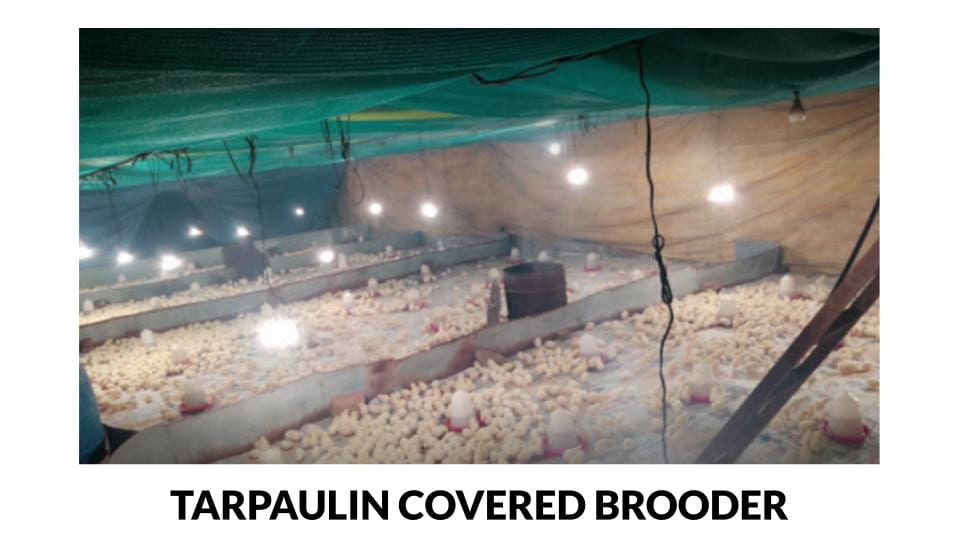 Tarpaulin Lined Electrically Lit Brooder House Photo