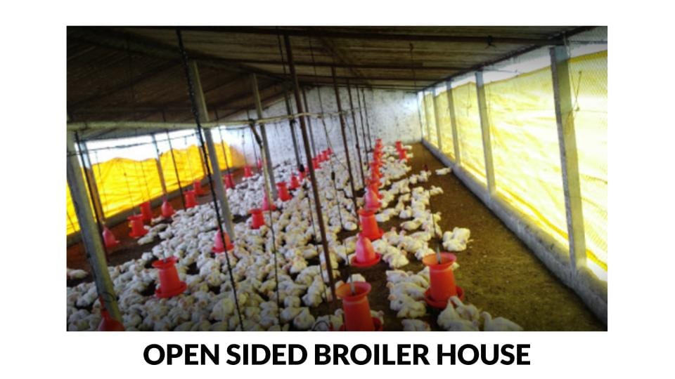 Open Sided Broiler House