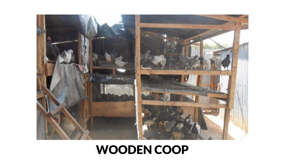 Wooden coop for meat birds photo