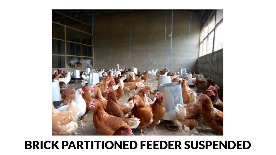 Brick partitioned open sided feeder suspended poultry house photo