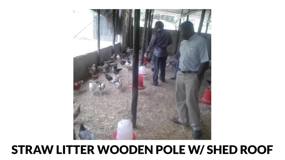 Straw Litter Wooden Pole Shed Style Roof Poultry House Photo
