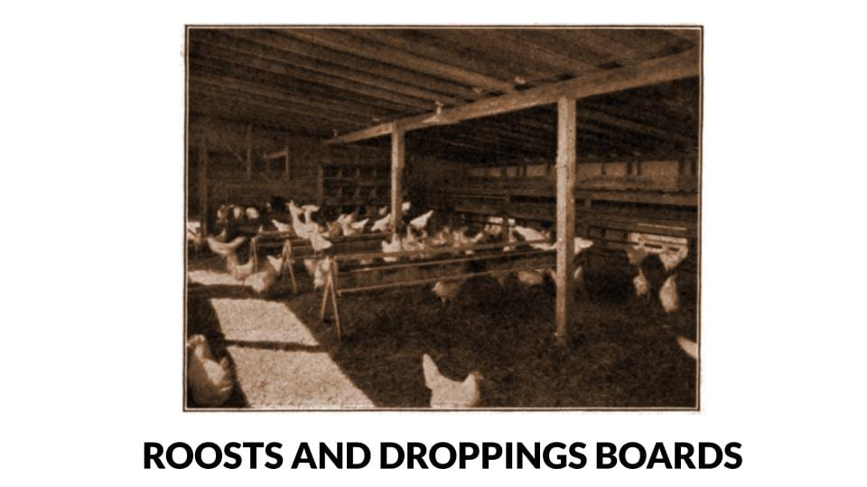 Poultry Roosts And Droppings Boards Photo
