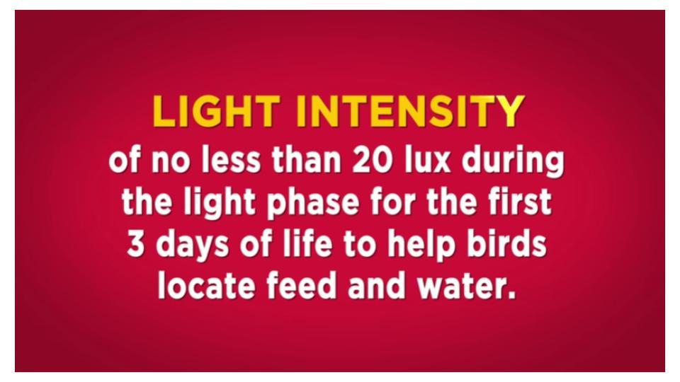 Brooder light intensity