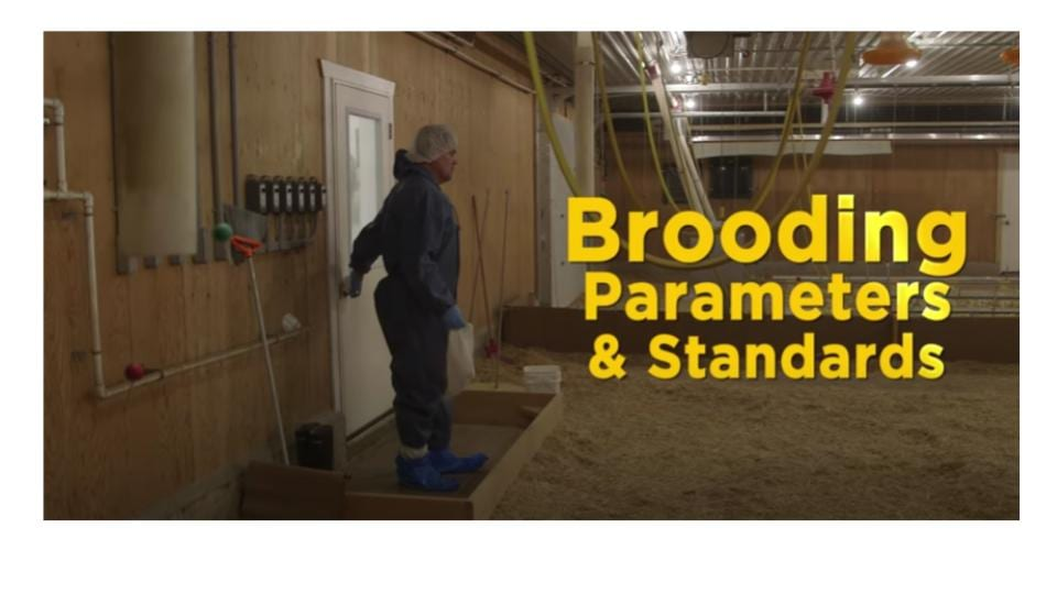Brooding Parameters and Standards