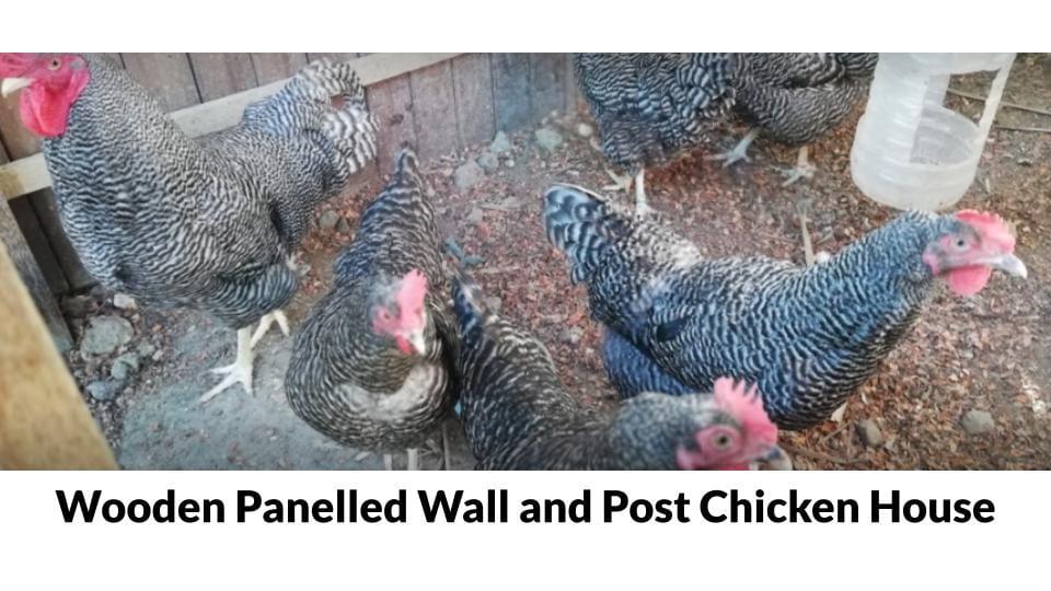 Cebu Free Range Chicken Farm Photo 1