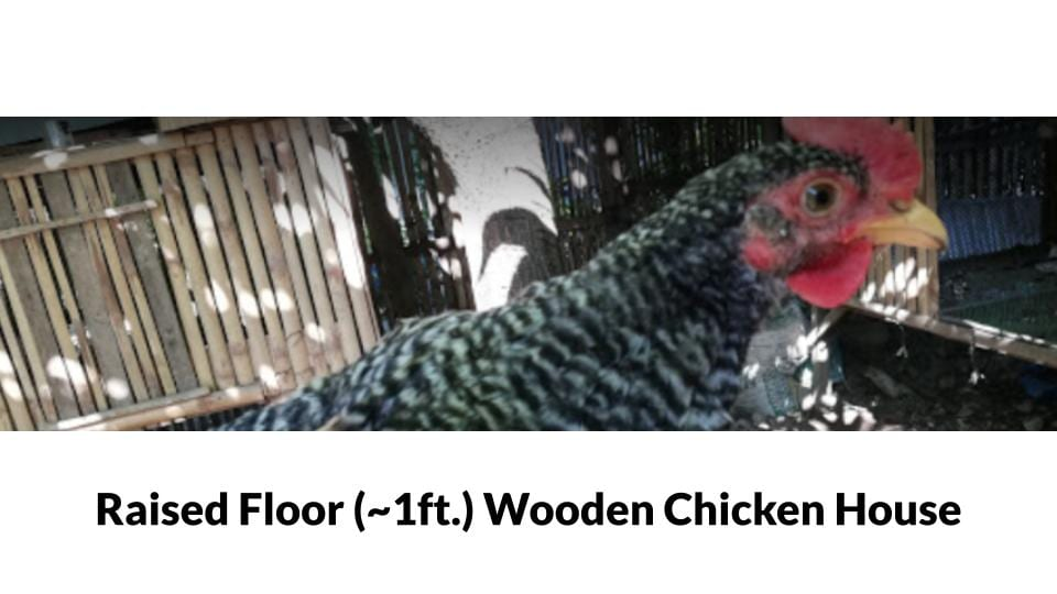 Cebu Free Range Chicken Farm Photo 3