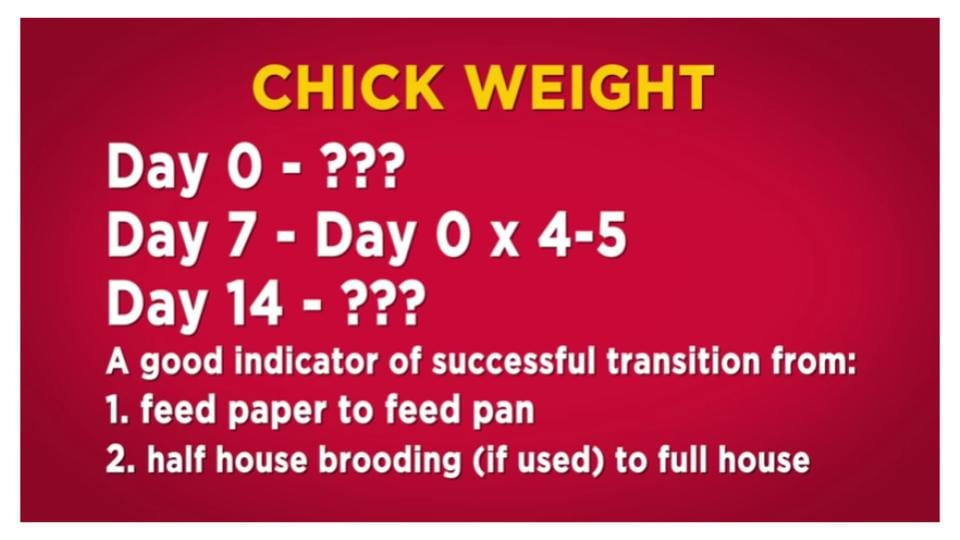 chick weight parameters