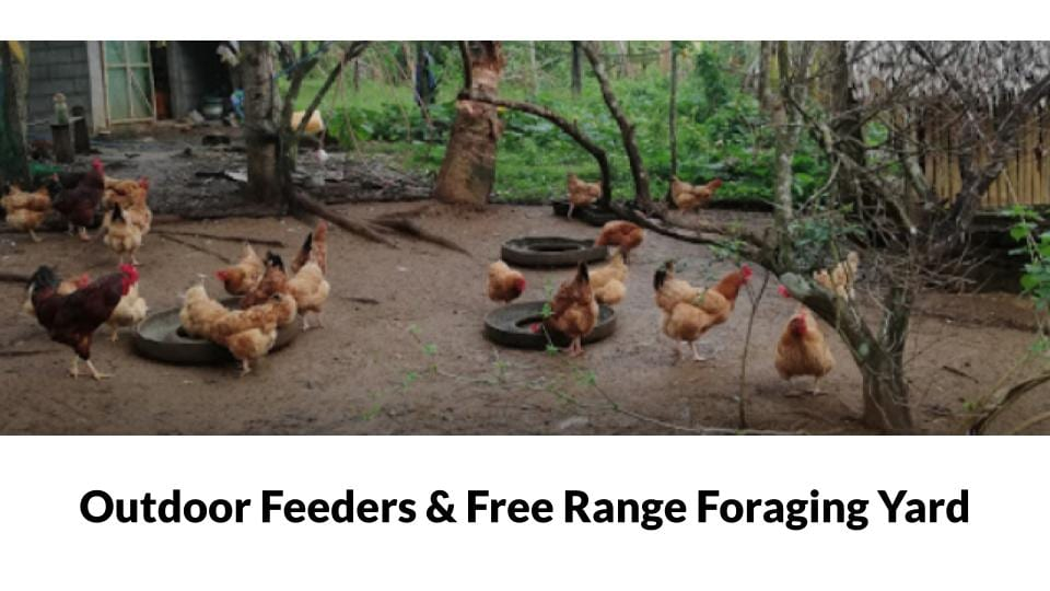 Femi Farm Free Range Chicken house Photo 2