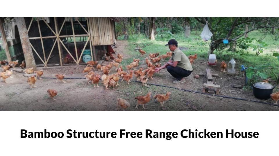 Femi Farm Free Range Chicken house Photo 1