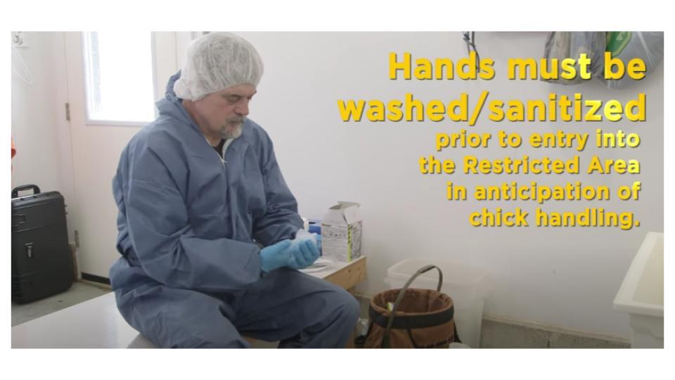 Hand sanitisation on a brooder farm