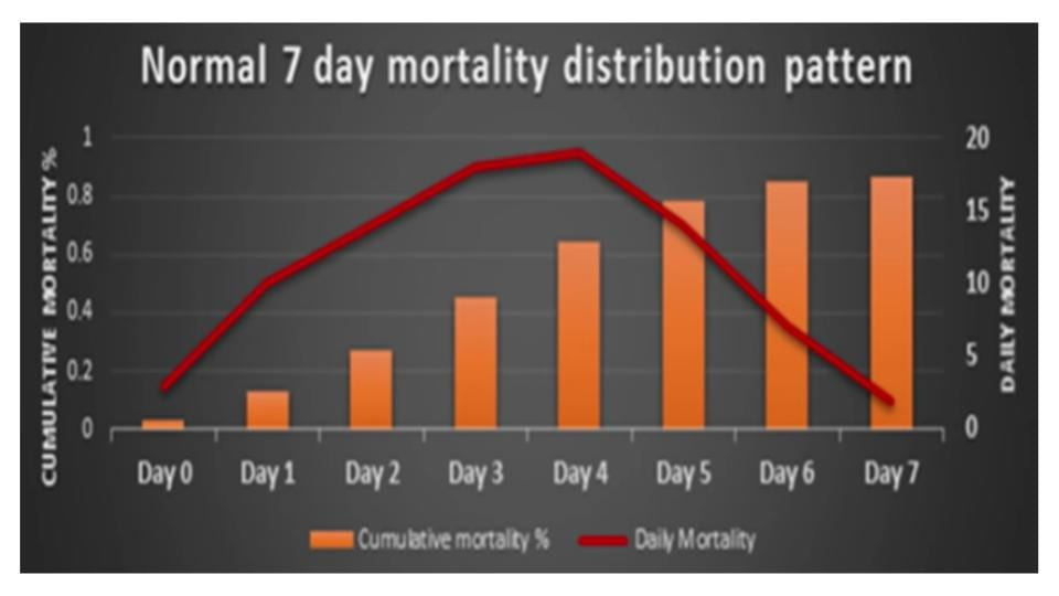 Normal 7 day chick mortality distribution pattern