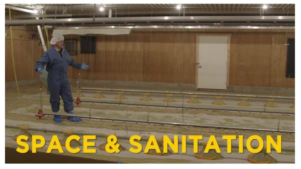 Space and sanitation in the brooder barn